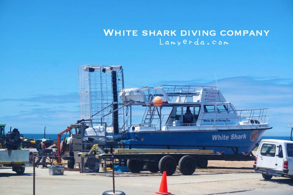 White Shark Diving 10