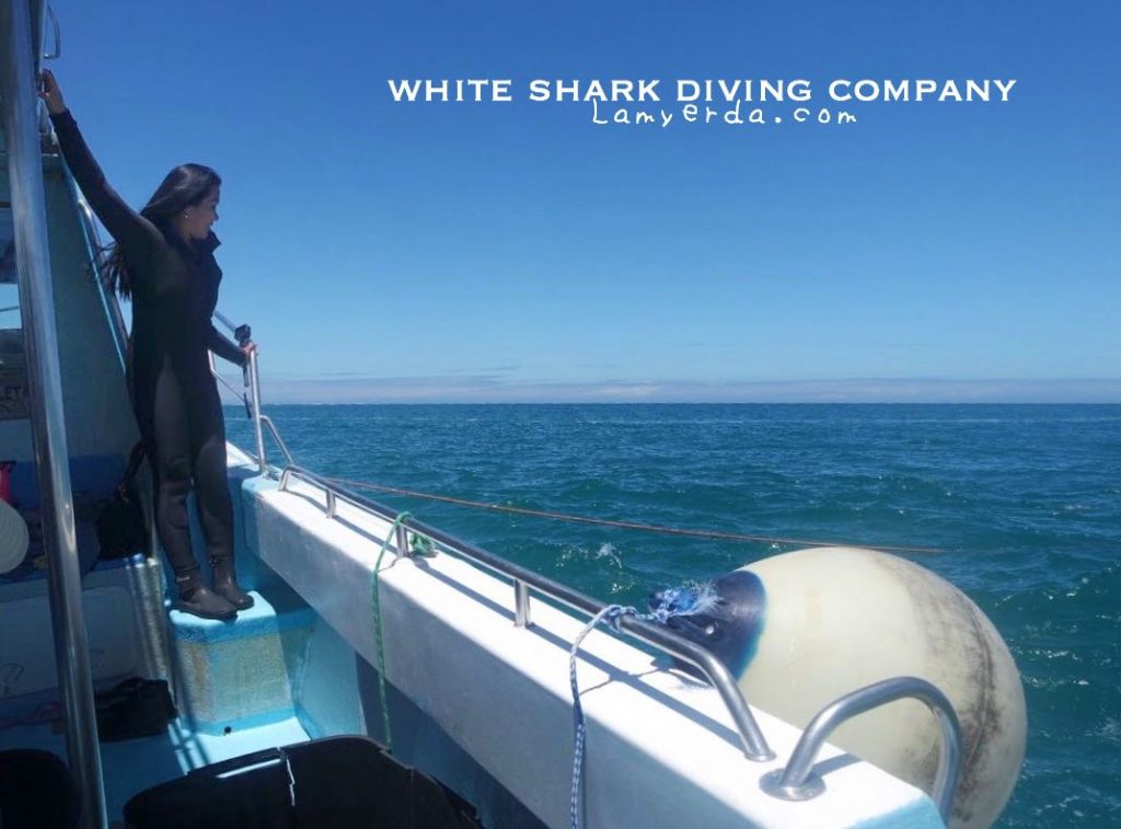 White Shark Diving 09