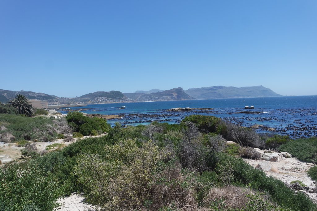 welcome to boulders beach simons town